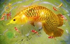 Tranh dán tường 3D cá đẹp lộng lẫy