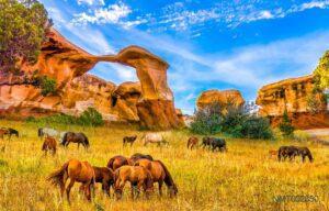 Tranh Dán Tường 3D Rừng Mùa Thu Và Những Chú Ngựa