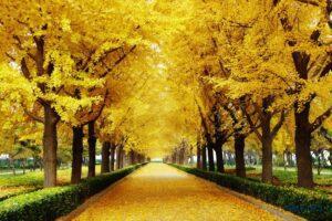 Tranh dán tường 3D Con đường mùa thu