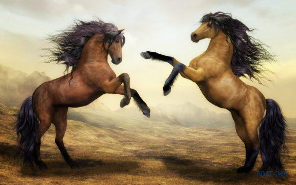 Tranh dán tường 3D Ngựa giao đấu