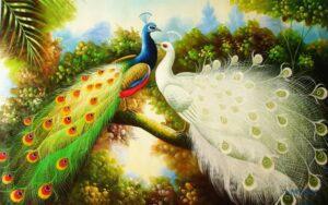 Tranh dán tường 3D Đôi chim công