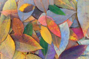Tranh dán tường 3D hương vị mùa thu